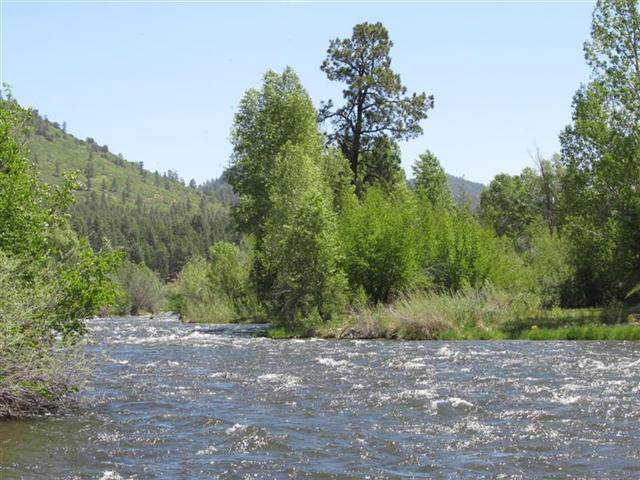 Water Front Properties on the Pine River